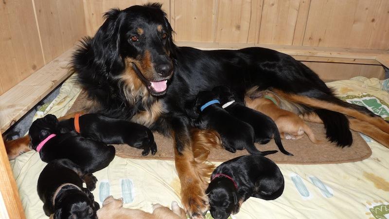 Aquila & babys 9. Tag