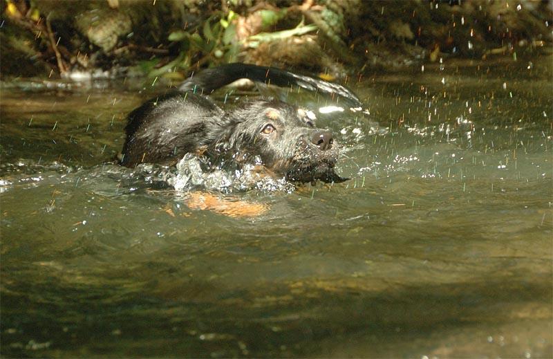 Aquila schwimmt
