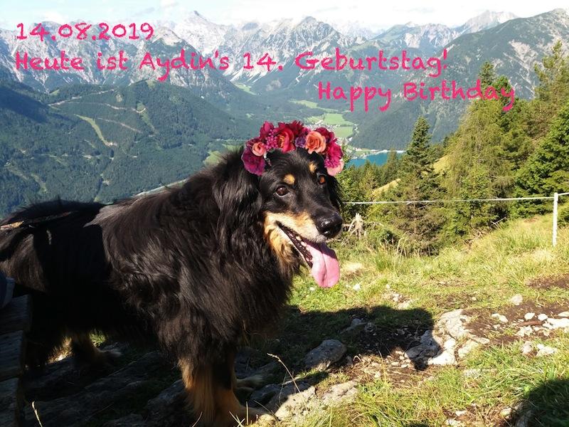 Dieses Foto wurde eine Woche vorher im Urlaub in Tirol geschossen. Da ist sie noch tapfer mitgewandert.