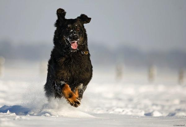 Lotte im ersten Schnee!