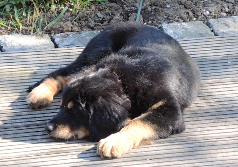 Müde nach dem langen Tag