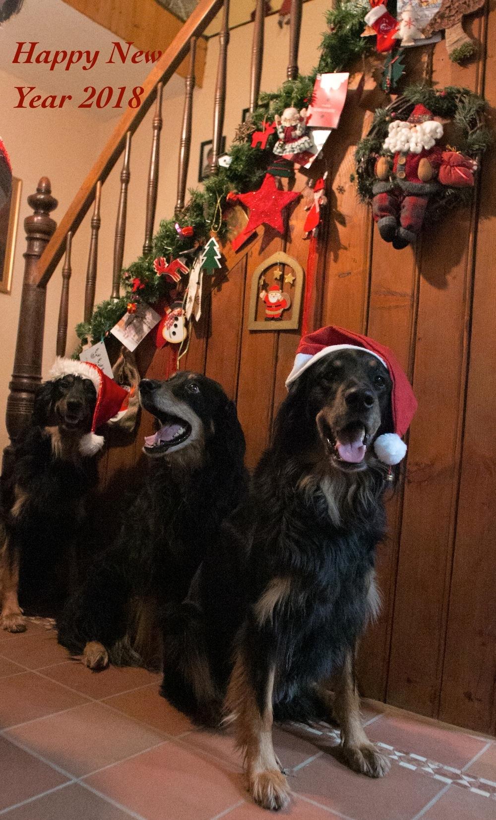 Weihnachtshunde2017