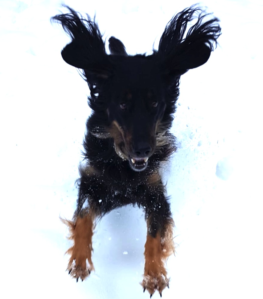 Kara (Biskah W.v.R.) hat Spass im Schnee!