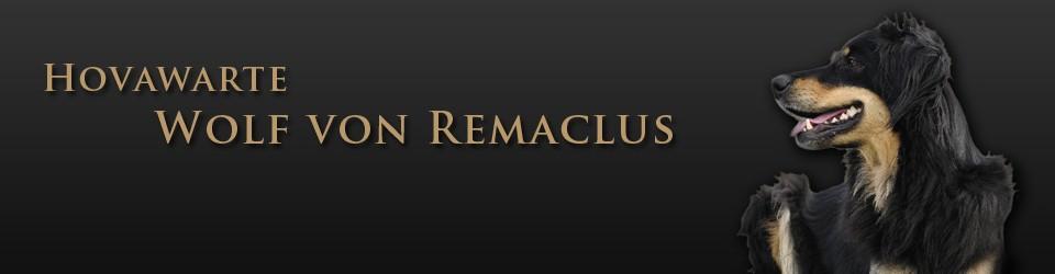 Hovawarte Wolf von Remaclus