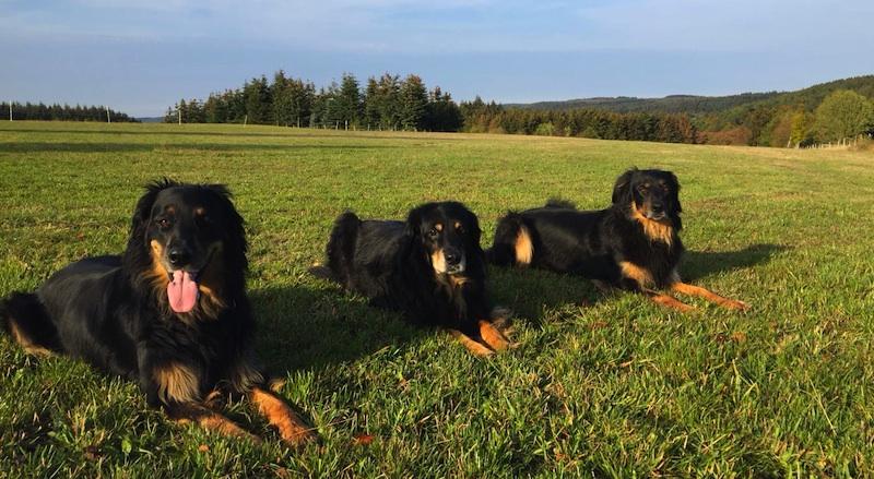 Unser Trio im Oktober 2018. Aquila, Aydin und Bonnie