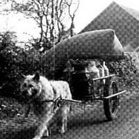 karrenhund1